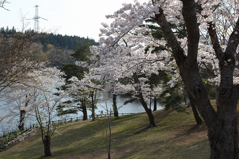 2014年春のむつ市早掛沼公園07