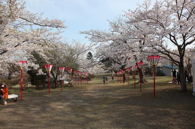 2014年春のむつ市早掛沼公園05