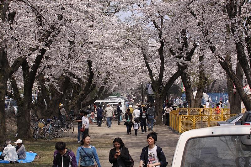 2014年春の十和田市官庁街通14