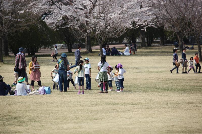 八戸公園満開のさくら04