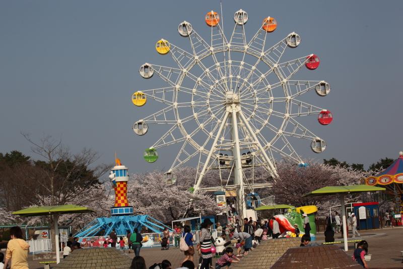 八戸公園満開のさくら15