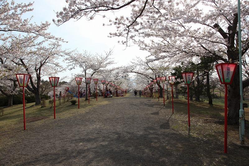 2014年春のむつ市早掛沼公園03