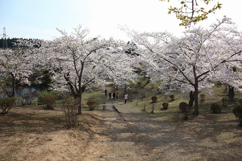 2014年春のむつ市早掛沼公園01