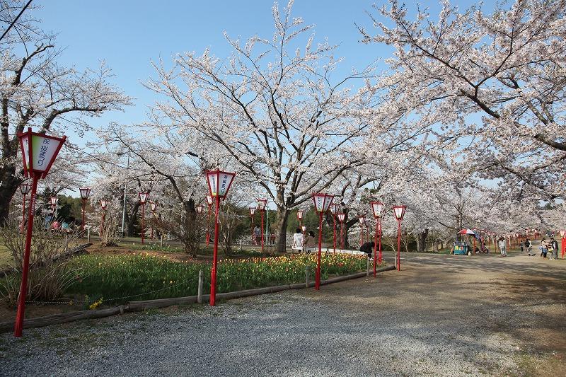 2014年春のむつ市早掛沼公園06