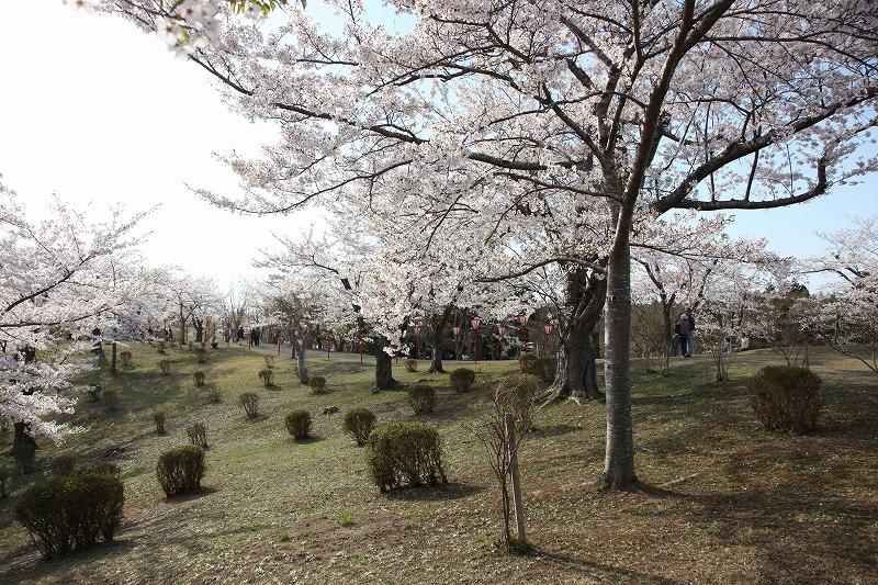 2014年春のむつ市早掛沼公園02